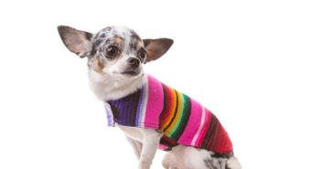 Dog-in-a-Mexican-poncho